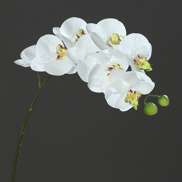"Orchidee-Phalaenopsis ""Real-Touch"" 80cm white-green"
