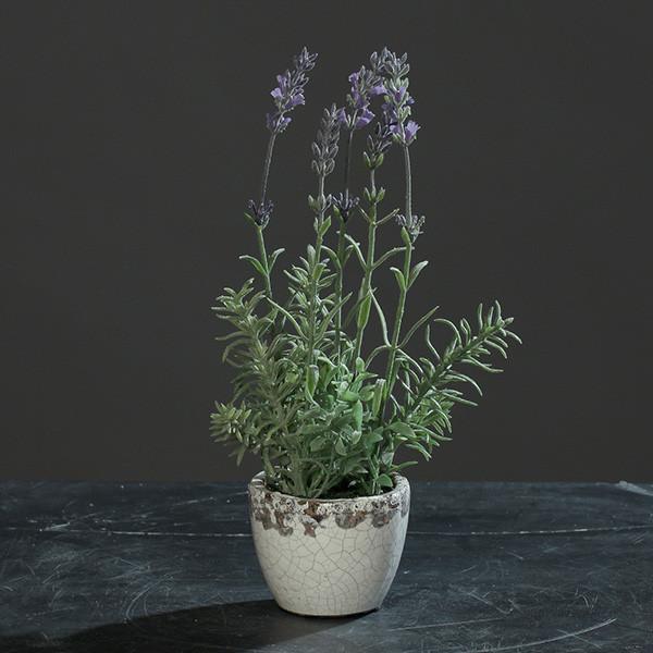 Lavendel im Topf 27cm