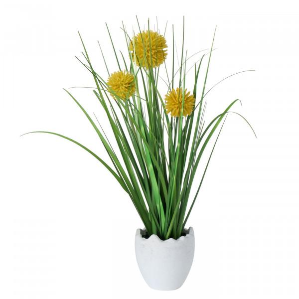 Topfpflanze Ziergras